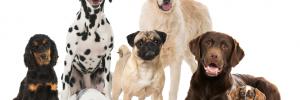 servicio integral veterinario animales | veterinarias| alimentos | peluquerias caninas  en chile 550 , rio cuarto, cordoba
